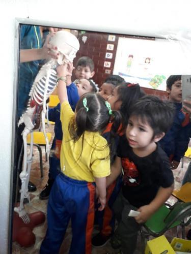 esqueleto 12